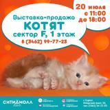Выставка-продажа породистых КОТЯТ! постер плакат